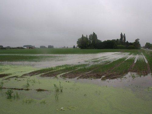 Calamité agricole suite aux pluies et inondations en avril et juin 2016